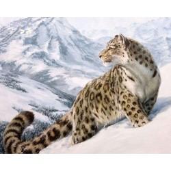Malování podle čísel Sněžný levhart M1061 Gaira - 1